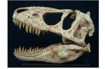 Николас Кейдж вернет череп монгольского динозавра